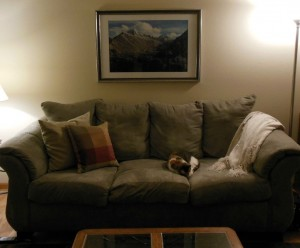 Regular pillows on couch