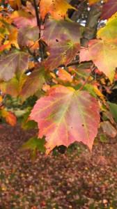 2013 Leaves 1