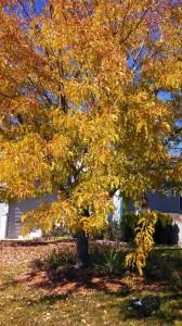 2013 Leaves 4